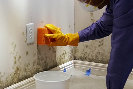 Remove-Mold-From-Walls